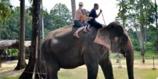 جولة 7 ساعات محمية رعاية الفيلة اليتيمة بكوالا جانداه