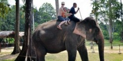 جولة 7 ساعات ال محمية رعاية الفيلة اليتيمة بكوالا جانداه